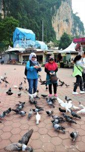 Pigeon at the yard of Batu Caves Temple in Selangor Malaysia